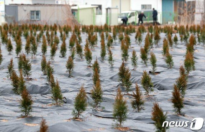 한국토지주택공사(LH) 일부 직원들의 광명 시흥 신도시 땅투기 의혹과 관련해 정부합동조사단이 4일 출범한다.2021.3.4/뉴스1 © News1 구윤성 기자