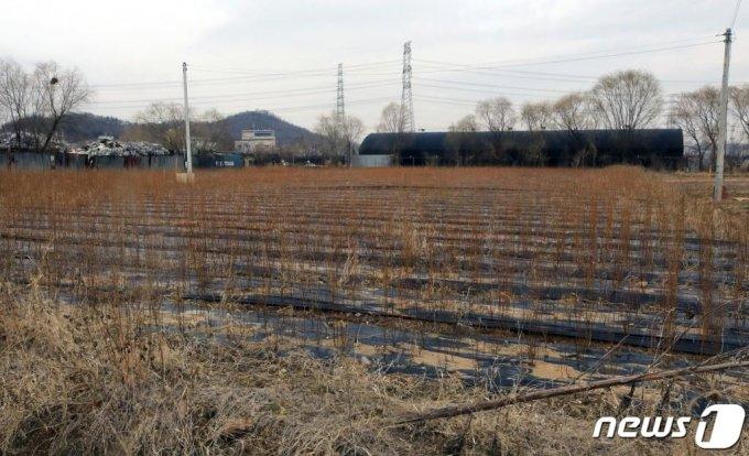 정부의 부동산대책 발표 전에 LH 직원들이 사들인 경기도 시흥시 과림동동 소재 농지 일대의 모습. /사진=뉴스1/뉴스1