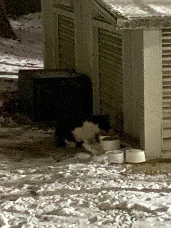 눈이 잔뜩 쌓여 있던 밤, 밥을 기다리다가 다가와 허겁지겁 먹던 연탄이. 같은 시간에 밥과 물을 채워주는 것, 그건 우리끼리만 아는 약속이었다./사진=남형도 기자