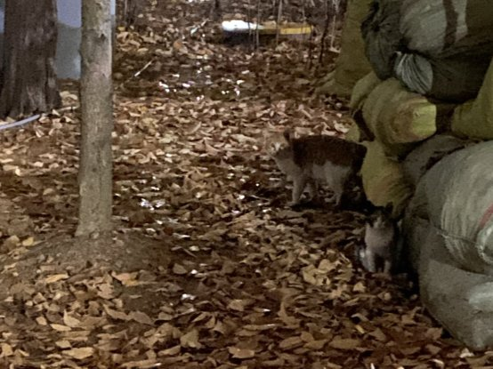 지난해 가을, 잔뜩 쌓인 낙엽 위로 모습을 드러낸 동네 고양이들./사진=남형도 기자