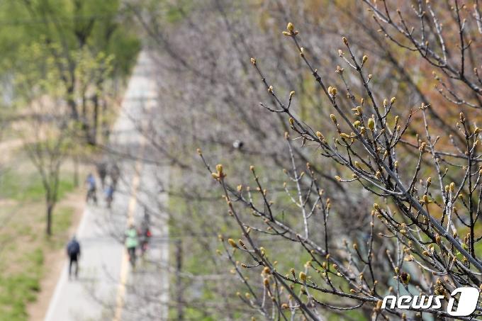 [사진] '봄이 성큼'