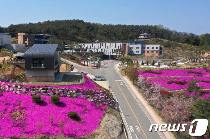 [포토]'봄이 왔네~봄이 와'…전북 순창 쉴랜드 입구 꽃잔디 만발