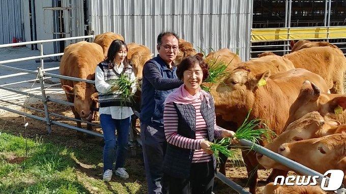동물복지축산 한우 농장 인증을 받은 해남 만희농장에서 소에게 먹이를 주고 있는 김소영 대표(왼쪽)와 아버지 김성희씨(가운데), 어머니 양만숙씨 모습. 2021.4.17© 뉴스1