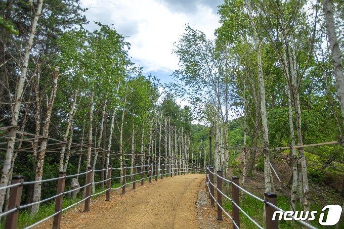 강아지숲 산책로 © 뉴스1