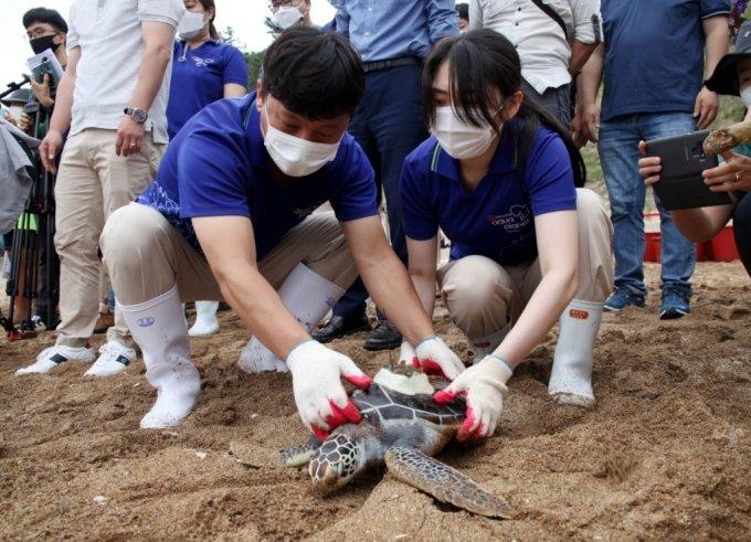 지난해 한화 아쿠아플라넷 여수와 해양수산부가 제주 중문색달해변에서 멸종위기종인 바다거북 18마리를 방류한 모습. /사진=아쿠아플라넷