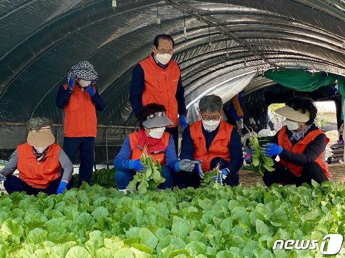 대전농협, 6월말까지 범 농협 농촌일손돕기 나선다