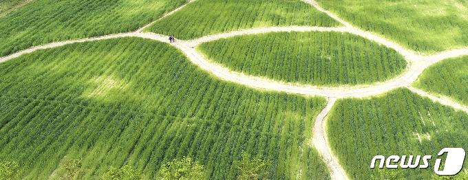 [사진] '초록세상'