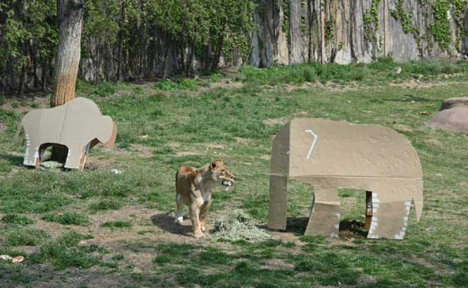 어! 아기코끼리인 줄 알았는데…동물원에 등장한 LG 포장박스