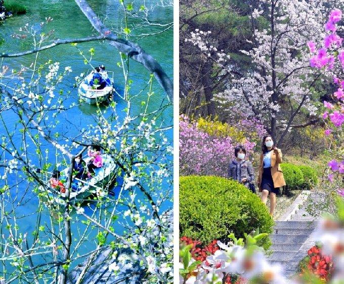 마스크를 쓰고 봄 꽃놀이를 즐기는 평양 시민들. (출처=북한 대외용 월간지 '조선') © 뉴스1
