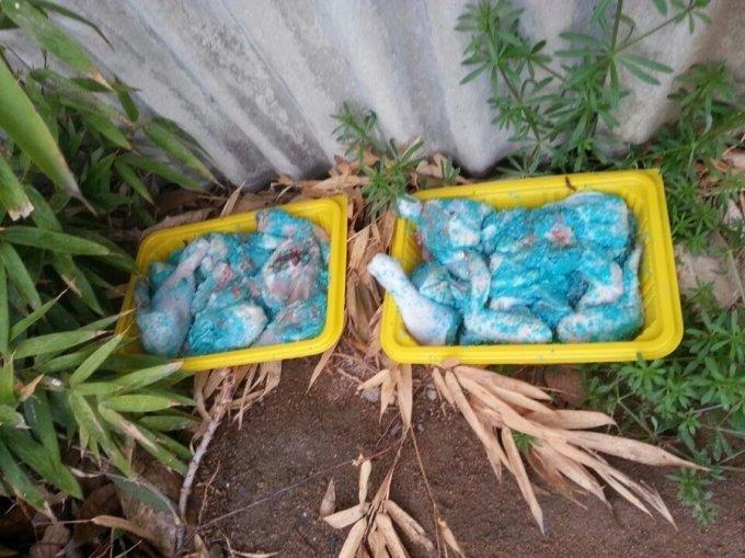 지난달 13일 대전 대덕구 석봉동 한 폐가 근처에서 발견된 쥐약이 버무려진 닭고기. /사진=대전길고양이보호협회 제공