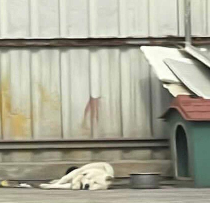 버려진 230마리…'강아지 엄마'가 떠났다[남기자의 체헐리즘]