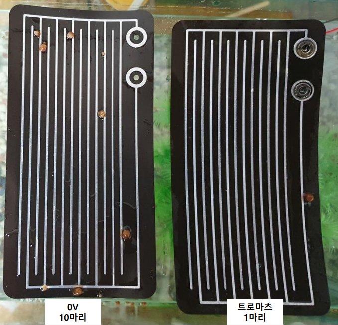 트로마츠 웨이브 발생 필름(왼쪽)과 일반 필름의 어항내 비교실험/사진제공=프록시헬스케어