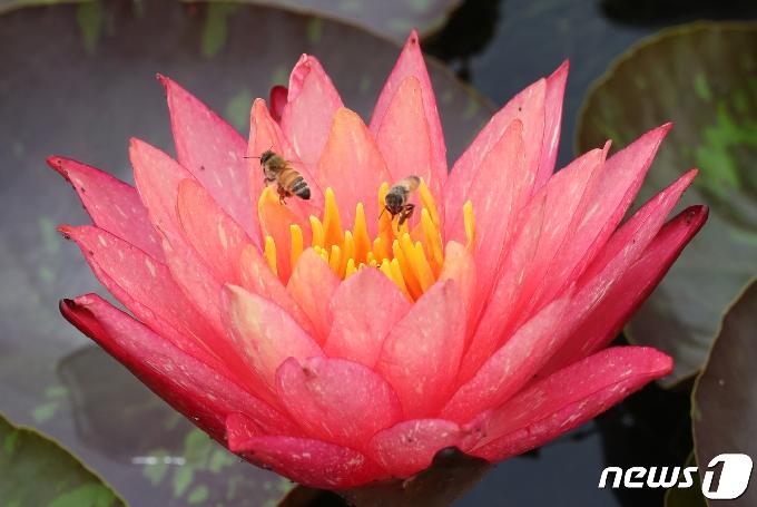 [사진] 꿀 따는 꿀벌