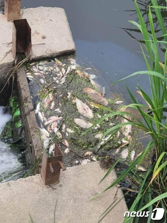 쿠팡 덕평 물류센터 인근 하천에서 발견된 물고기 사체.(뉴스1 DB)© News1