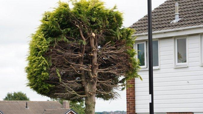 영국의 한 노부부가 나무에 사는 새 소리가 시끄럽다는 황당한 이유를 들며 25년 된 나무를 반토막냈다. /사진='Ferndene Park and Bits' 페이스북