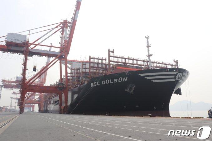 (광양=뉴스1) 서순규 기자 = 14일 세계 최대 컨테이너선박인 '엠에스씨 굴슨'(MSC GULSUN)이 광양항에 처음 입항했다. (여수광양항만공사 제공)2019.7.14/뉴스1