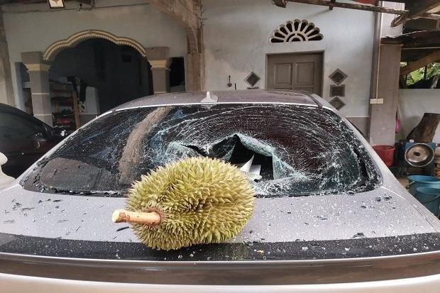 말레이시아 한 남성이 자신의 승용차를 박살 낸 두리안을 판매한다는 글을 사회관계망 서비스(SNS)에 올려 화제가 되고 있다. /사진=트위터 캡처