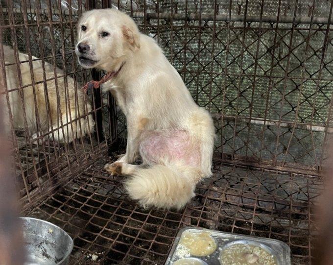 불법 개 도살장의 뜬 장에 갇혀 있는 개/사진제공=동물권행동 카라