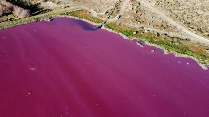 분홍빛으로 물든 아르헨티나 호수… 원인은 '살균제'였다