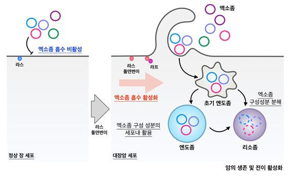 순천향대 최동식 교수