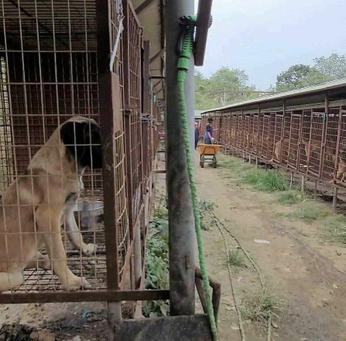 인천 계양산 개농장 당시 뜬장에 있는 개들 모습./사진=롯데목장 개살리기 시민모임(인스타그램 @lotte250dogs)