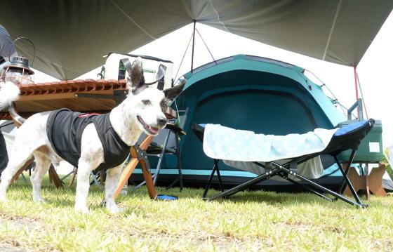 전북 임실군 오수면 오수의견관광지에서 반려동물과 함께 즐기는 차박 캠핑 페스티벌 '눈치 보지 마시개(犬)가 열린 6월 5일 애완견이 캠핑을 즐기고 있다./사진=뉴시스