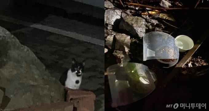 동네 고양이 연탄이를 위해, 우산이 씌워진 밥그릇을 준비했다. 비가 와도 퉁퉁 불어난 밥을 먹진 않았으면 해서./사진=눈에서 하트 발사하는 남형도 기자