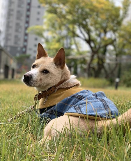 풀밭의 멋진 폴. 정말 신사 같다. 눈빛이 쏴라 있다./사진=폴 보호자님