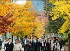 화려한 가을색 뽐내는 가로수