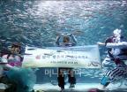 코엑스아쿠아리움 '수중에서 전하는 새해인사'