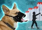 강아지 5마리 넘으면 버려라?…반려견 정책 '혼란'