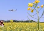 '유채꽃과 비행기'