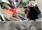 판다-코끼리-원숭이의 추석 특식 먹기