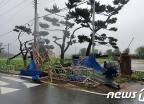 [오늘 날씨]17호 태풍 '타파' 북상…전국 비·강풍 유의