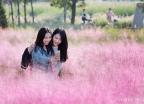 '핑크빛 가을'