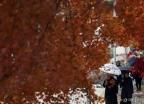 겨울 재촉하는 가을비