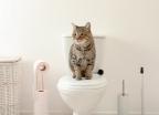 코로나19 감염 막으려면 화장실 변기 뚜껑부터 닫아라