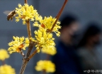'어느새 다가온 봄'