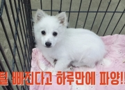 '유기동물 천국' 소문나자…전국에서 버리러 왔다