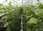[르포]농가 생산성 30% 껑충···최악의 식량위기 해법이 보인다