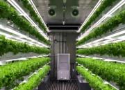 정용진이 점찍은 컨테이너 농장···IoT 접목 생산량 100배 늘려