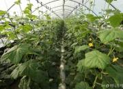 식량위기 해결사로 나선 스타트업···첨단기술로 '농업혁명' 이끈다