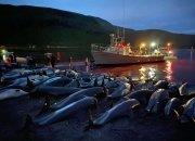 돌고래 1400마리 몰살...'피바다' 된 패로 제도에 무슨일이