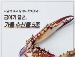 [바다정보다잇다]금어기 끝낸, 제철 맞은 가을 수산물 5종
