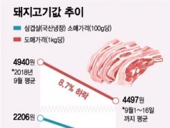 [MT리포트]아프리카돼지열병 발생…삼겹살, '金겹살' 될까