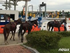 말 세마리가 갑자기 고속도로에… 무슨일?
