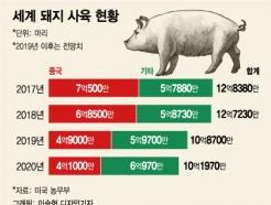 아시아 휩쓰는 돼지열병…심장병환자들이 떠는 이유는