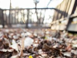 [사진] 봄의 전령 복수초 찾아온 홍릉숲