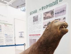 [사진] 日, 도쿄올림픽 앞두고 '영토주권 전시관' 확장 개관