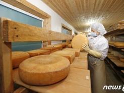 [사진] '맛있는 치즈가 되길 바라며'
